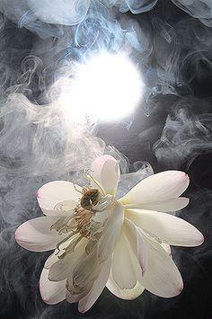 mystical - looks like a fairie