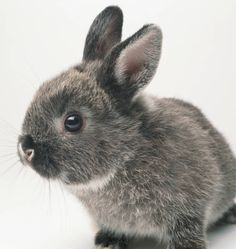 RABBIT CARE GUIDE-And just a friendly reminder that bunnies should NOT be given as Easter gifts. They are a long term commitment and need care and finances to keep as a pet