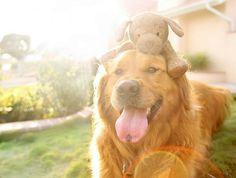 Портреты собак Jessica Trinh