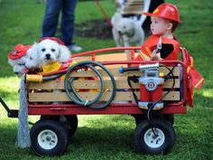 Firefighter Costume, Two-year-old Kyle Lee rides in a wagon with his grandfather's dogs Gracey, Joey and Benzi at the Halloween Dog Costume . Halloween Bebes, Pregnant Halloween Costumes, Halloween Fun, Family Halloween, Dalmatian Halloween, Halloween Parade, Halloween Pictures, Halloween Activities, Best Dog Costumes
