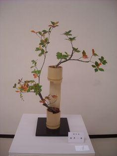 深知.. Creative Flower Arrangements, Ikebana Flower Arrangement, Ikebana Arrangements, Floral Arrangements, Bamboo Art, Bamboo Crafts, Chinese Flowers, Japanese Flowers, Diy Diwali Decorations