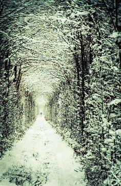 Túnel del Amor , que se encuentra en Ucrania , que solía ser sólo otra sección ferrocarril tren, pero con el tiempo se convirtió en uno de los lugares más románticos del mundo.  Invierno
