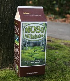 """Hmm... user-friendly """"Moss Milkshake."""" If this isn't overly invasive, it may be an interesting alternative for grass in shady garden areas!"""