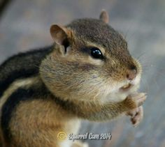 What nut? Creatures, Animals, Animales, Animaux, Animal Memes, Animal, Animais, Dieren