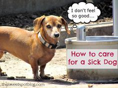 How to care for a sick dog? by The Sweet Spot Blog