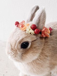 Rabbit pets bunny - Autumn is here! As the trees turn into shades of red, rust, orange and yellows, this flower crown will complement any outing or photoshoot you Cute Baby Bunnies, Cute Babies, Animals And Pets, Funny Animals, Small Animals, Lapin Art, Cute Little Animals, Cute Creatures, Pet Accessories