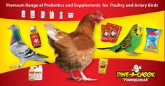 @Townsville  #dineachook  #Egg  #homesteading   #drinkers #fidders  #chickens  #mealwarms  #hens