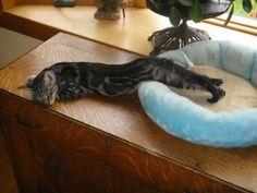 Snaked Cat