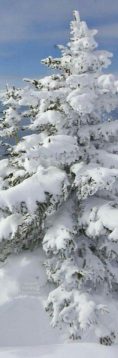 Winter snowfall.