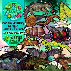 New Zealand's lack of mammals (apart from our native bats) has given lots of other interesting creatures a chance to shine! This selection of clip art contains some of the rarely seen but fascinating animals (including the tuatara, weta, geckos, huhu grub, puriri moth, snails and more) that are found in New Zealand's bush and waters... This set contains 32 images (16 colour and 16 blackline) as high quality (300 dpi) PNGs with transparent backgrounds.