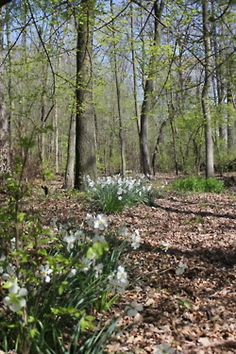 Spring in Lake Forest, IL: April 2012