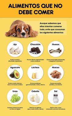 Friend Comidas prohibidas para tu Cachorro ☚