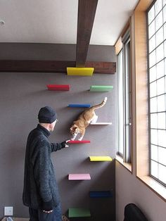 cat shelves | Found on blogimg.goo.ne.jp