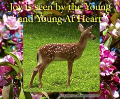 Joy is seen by the young and the young at heart.