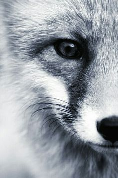 #FoxLove