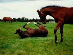 NYHEDSMAIL TIL HESTEFOLKET ∙ uge 11 2020 Træning af åring / Hesteagility / Bomtræning / TTouch-metoden / Hestemassage / Akupressur / Turridning / Rygsving / Mest læste i ugen der gik. Horses, Animals, Acupressure, Animales, Animaux, Horse, Words, Animal, Animais