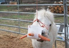 Brilliant treat/toys for horses! Sooo gonna try these! Diy Horse Toys, Horse Crafts, Horse Stalls, Horse Barns, Homemade Horse Treats, Goat Toys, Horse Camp, Parcs, Horse Love