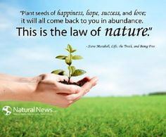 Quote-Plant-Seeds-of-Happiness-Steve-Maraboli.jpg