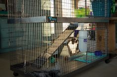 Bunny Condo cage from KW Cages. Photo by Hook's Hollands Ohio Holland Lops.