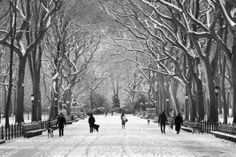 Winters in the park.  See you there, Mimi.