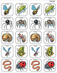 Wonderful Pics preschool printables animals Suggestions Would you generally ponder how you can find the money for everthing? No matter whether you choose Montessori knowledge Free Preschool, Preschool Printables, Preschool Science, Learning Websites, Teacher Created Resources, Insect Art, Bugs And Insects, Animal Projects, Toddler Fun