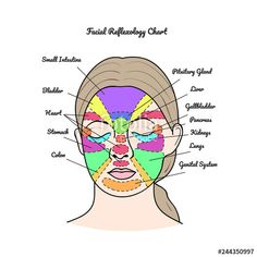 Pituitary Gland, Acupressure Points, Reflexology, Health And Beauty, Trigger Points