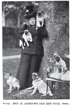 historic pug - Google Search