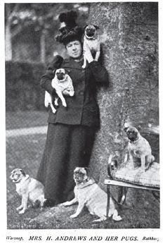 1897 Pugs photo
