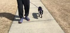 National Puppy Day: North Carolina dog gets new prosthetic paws