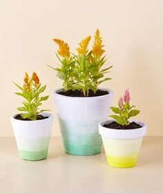 Without the burnt orange hue, these beautiful flower pots are almost unrecognizable.