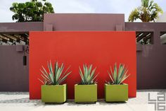 Warm welcome to a Mexican home with abundance of colors in walls and plants.  Los Barriles, Baja California Sur, Mexico.