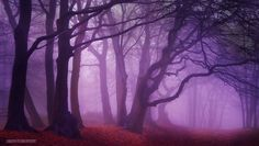 ~ Sleepy Hollow ~  By Nelleke Pieters Location: Ermelo,The Netherlands