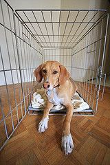 Top 10 Lessons on Crate Training Adult Dog