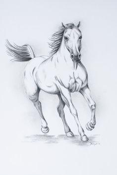 ORIGINAL Charcoal White Horse sketch 11x14 by JaclynsStudio