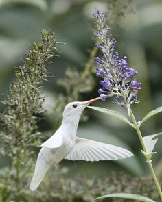 Picture Of flowers and plants to attract butterflies and hummingbirds  6