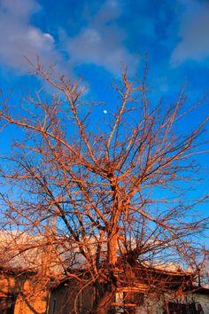 tree&moon