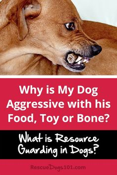 Dogs and Resource Guarding – Why is My Dog is Food…