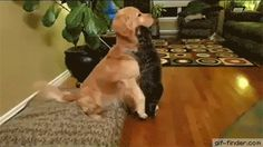 Dog thanks cat for the hug