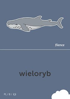 Wieloryb #CardFly #flience #animal #polish #education #flashcard #language