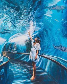 Aquarium of the Bay, San Francisco, US 💧 📸 ✨ . Dubai Travel, Travel Usa, Luxury Travel, Foto Dubai, Aquarium Pictures, Dubai Holidays, Singapore Photos, Sea Photo, World Photo
