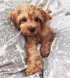 Super Cute Puppies, Cute Baby Dogs, Cute Dogs And Puppies, I Love Dogs, Doggies, Baby Puppies, Cute Animal Pictures, Dog Pictures, Chien Mira
