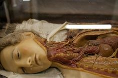 Anatomical Venus: The gory idealized beauty of wax medical models | Dangerous Minds