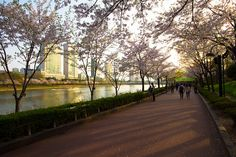 Seokchon Lake Cherry Blossoms by stuckinseoul, via Flickr