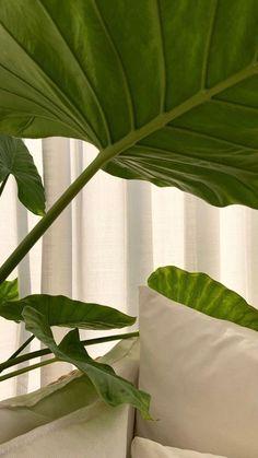 Plant Aesthetic, Nature Aesthetic, Aesthetic Photo, Aesthetic Pictures, Aesthetic Backgrounds, Aesthetic Iphone Wallpaper, Aesthetic Wallpapers, Plant Wallpaper, Green Wallpaper