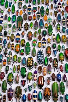 Beetle Collection at the Karlsruhe Museum of Natural History, Germany  Photo: Scott Lewis