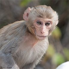 """The Animal Legal Defense Fund Files First Brief in """"MonkeyGate"""" Appeal"""