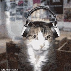 Cat with Headphones Dancing Click here to learn how to stop your cats from spraying in your house.