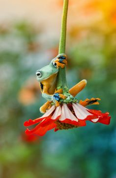 creatures great and small from all over the world, with a tad of nature ❀ Cute Creatures, Beautiful Creatures, Animals Beautiful, Funny Frogs, Cute Frogs, Frog Pictures, Cute Animal Pictures, Cute Baby Animals, Funny Animals
