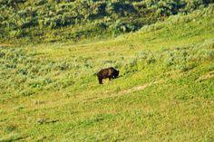 La force et tendresse d'un ours