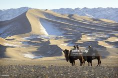 Foto de stock : Nomads & camels by snow covered dunes, Gobi desert